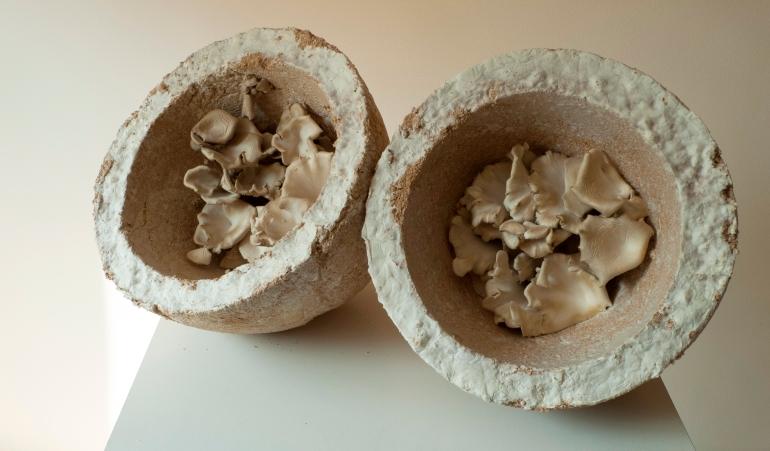 Mycelium bowls.  Photo: Nomeda Urbonas